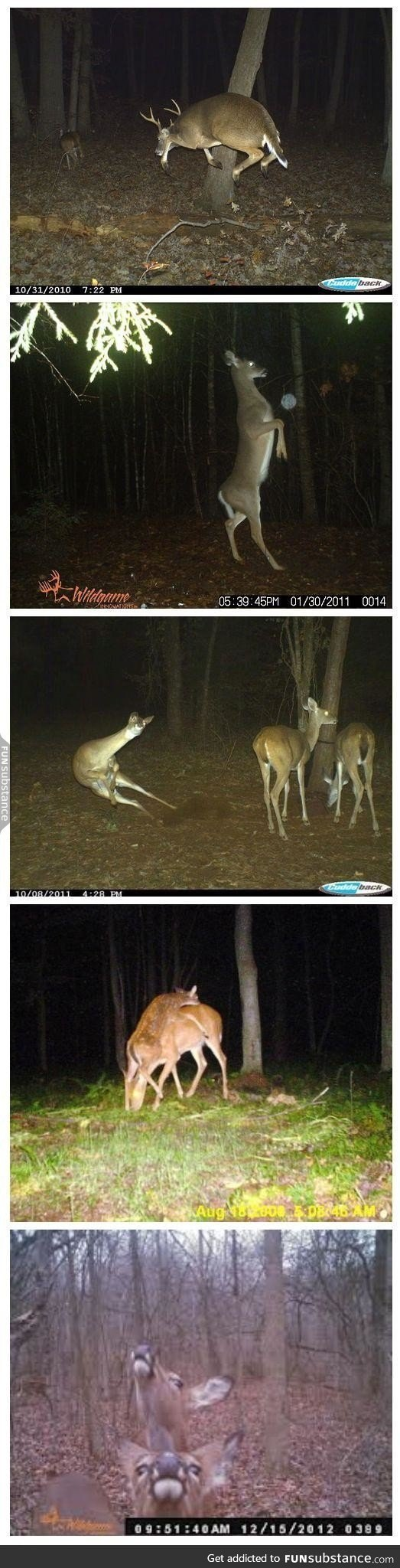 Men's Push Back Hairstyle Best Of Can We Take A Moment to Appreciate the Beauty Of Trail Cam Deer Funsubstance
